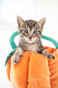 クッションの上の猫(雑種)の写真素材 [FYI01774899]