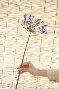 すだれの前で花を持つ女性の写真素材 [FYI01775104]