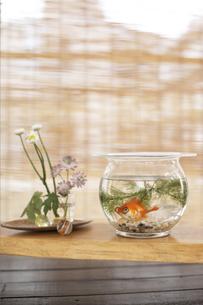 金魚鉢と花の写真素材 [FYI01775209]