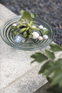鉢に入った植物の写真素材 [FYI01775394]