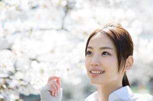 満開の桜を楽しむ若い女性の写真素材 [FYI01776015]
