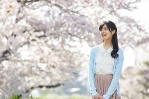 桜に囲まれたリラックスした女性の写真素材 [FYI01777366]