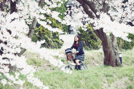 桜並木を自転車で走る女子高生の写真素材 [FYI01777985]