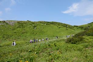 伊吹山西遊歩道にて、お花畑の散策の写真素材 [FYI01778017]