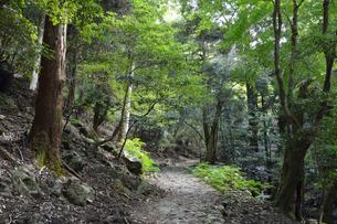 石畳続く滝坂の道(柳生街道) と春日山原始林の写真素材 [FYI01778089]
