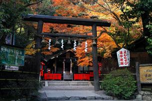 11月秋 紅葉の野宮神社 京都の秋景色の写真素材 [FYI01778148]