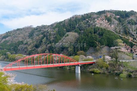 春の月ヶ瀬湖と月瀬橋の写真素材 [FYI01778232]