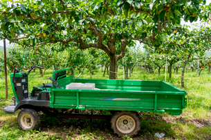 初夏の果樹園と作業用トラックの写真素材 [FYI01778277]
