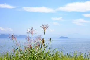 琵琶湖と竹生島とススキの写真素材 [FYI01778283]