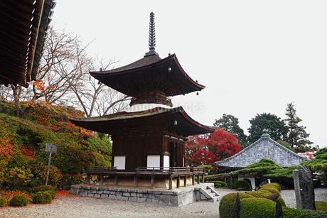 11月秋 紅葉の善峯寺 京都の秋景色の写真素材 [FYI01778284]