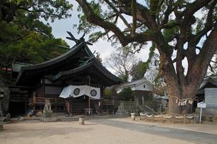 12月初冬 艮(うしとら)神社 -尾道最古の神社-の写真素材 [FYI01778320]