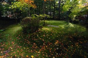 11月秋 紅葉の野宮神社 京都の秋景色の写真素材 [FYI01778334]