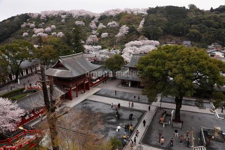 3月春 桜の祐徳稲荷神社の写真素材 [FYI01778342]
