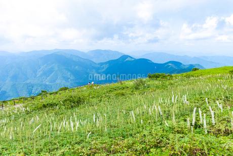夏山の草原風景(晩夏から初秋の伊吹山)の写真素材 [FYI01778347]