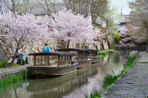 日本の桜風景 八幡堀にて、桜と柳と和船の写真素材 [FYI01778372]
