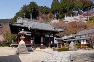 4月 桜の善峯(よしみね)寺 京都の春景色の写真素材 [FYI01778384]