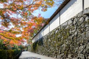坂本の紅葉と穴太積みの石垣の写真素材 [FYI01778405]
