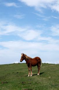 10月秋 国賀海岸の野生馬-隠岐の風物詩の写真素材 [FYI01778411]