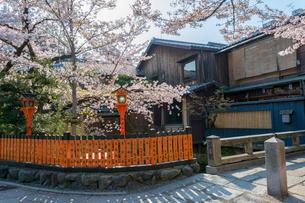 祇園白川 巽橋と桜と料亭の写真素材 [FYI01778432]