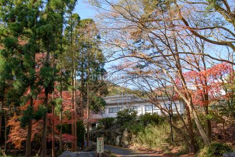 近江勧学館と紅葉の写真素材 [FYI01778442]