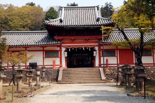 4月 春の手向山八幡宮 奈良の春景色の写真素材 [FYI01778445]