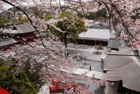 3月春 桜の祐徳稲荷神社の写真素材 [FYI01778472]
