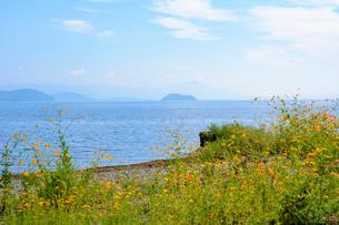 琵琶湖と竹生島を望むコスモス畑の写真素材 [FYI01778484]