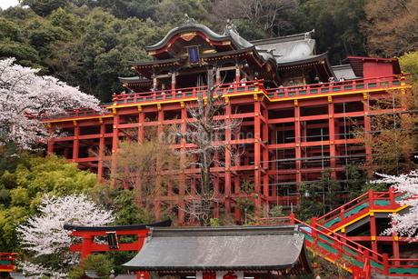 3月春 桜の祐徳稲荷神社の写真素材 [FYI01778485]