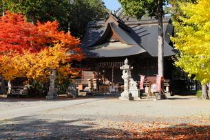 11月晩秋 紅葉の富士御室浅間神社 -富士山世界遺産構成資産-の写真素材 [FYI01778493]