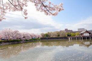 日本の桜風景 高田千本桜と大中公園の写真素材 [FYI01778523]