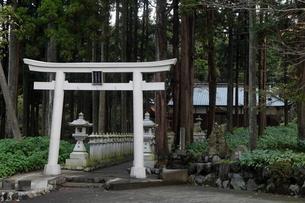 11月晩秋 山宮浅間神社 -富士山世界遺産構成資産-の写真素材 [FYI01778530]