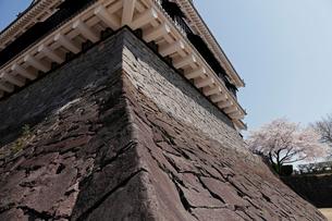 3月春 桜の熊本城の写真素材 [FYI01778544]
