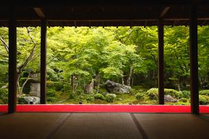 6月初夏 サツキの圓光寺 京都の庭園美の写真素材 [FYI01778548]
