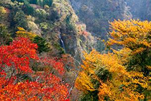 11月秋 紅葉の震動の滝 の写真素材 [FYI01778568]