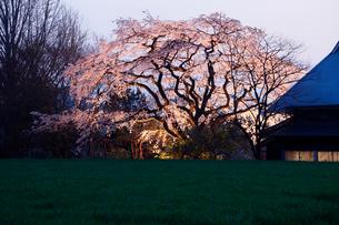3月春 宝珠寺のヒメシダレザクラ 九州の春景色 の写真素材 [FYI01778574]