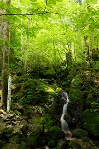 7月の四万十川源流点 四国の水景色の写真素材 [FYI01778579]