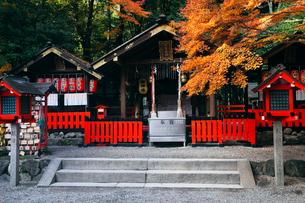11月秋 紅葉の野宮神社 京都の秋景色の写真素材 [FYI01778599]