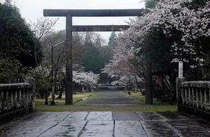 3月春 桜の相良護国神社(人吉城跡) 九州の春景色の写真素材 [FYI01778648]