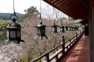 4月 桜の談山神社 奈良の春景色の写真素材 [FYI01778654]