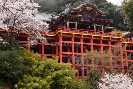 3月春 桜の祐徳稲荷神社の写真素材 [FYI01778668]