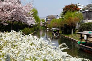 4月 桜の伏見界隈 京都の春景色の写真素材 [FYI01778725]