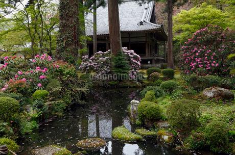 4月 シャクナゲの大原三千院 京都の春景色の写真素材 [FYI01778751]