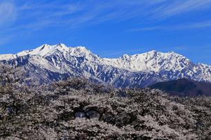 4月,信州大町から見た残雪の北アルプスの写真素材 [FYI01778781]