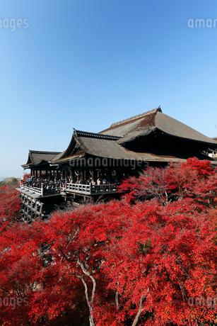 12月晩秋 紅葉の清水寺 京都の秋景色の写真素材 [FYI01778784]