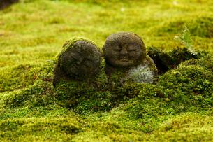 4月春 大原三千院のわらべ地蔵の写真素材 [FYI01778785]