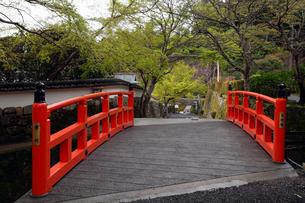 4月 シャクナゲの大原三千院 京都の春景色の写真素材 [FYI01778792]