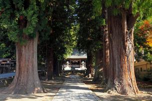 11月晩秋 河口浅間神社 -富士山世界遺産構成資産-の写真素材 [FYI01778797]