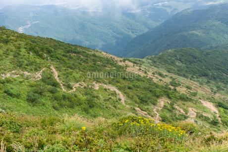伊吹山登山道の写真素材 [FYI01778807]
