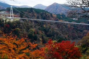 11月 紅葉の九重夢大吊橋の写真素材 [FYI01778812]