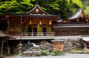5月 緑の貴船神社 京都の春景色の写真素材 [FYI01778815]